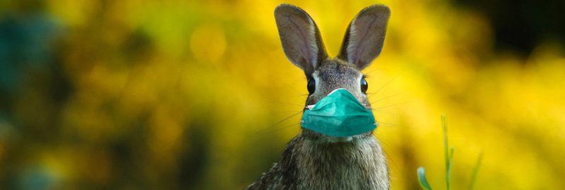 Gesichtsmaske mit Hasen bedruckt.