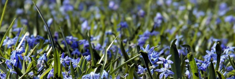 Mundschutz mit Frühlingsmotiven.