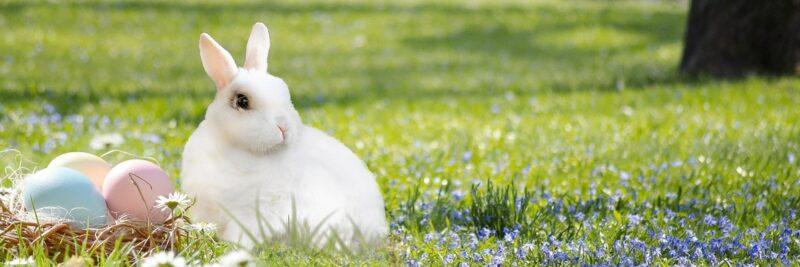 Marken, Frohe Ostern wünscht, WirHD
