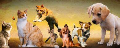 Grabsteine für Katzen, Grabstein, Katze, Kater, Gedenktafeln, Grabkerzen, Grablaternen, Schiefertafeln, Steinfiguren