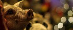 Schwein als lebensgroße Figur, Schweine-Figuren für den Garten