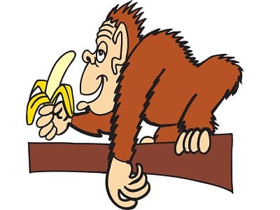 Gorilla mit Banane, Affe, Dessertbanane, Banane, Obstbanane, Paradiesfeige, Ast, lecker, Essen.